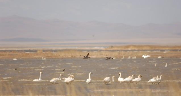 GYM_wetland-huliyetu_imn