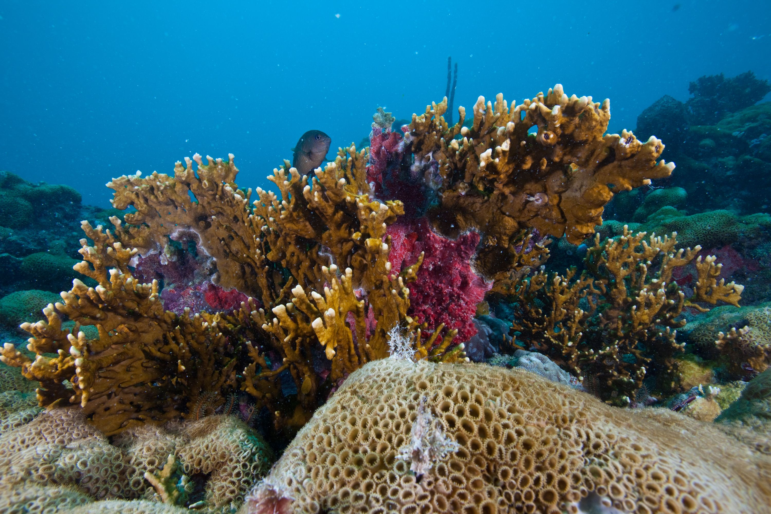 ci_84127626_Coral_Abrolhos-National-Park-Brazil_Luciano-Candisani_backslash_iLCP