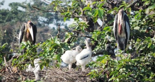 Three chicks in nest © Purnima Devi Barman 2014