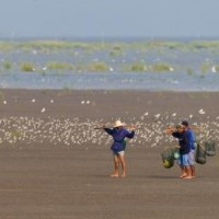 People and shorebirds © Luke Tang