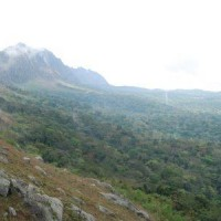 Angolan scarp forest