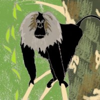 Lion-tailed macaque © K.Santhosh