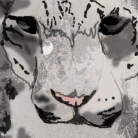 Snow leopard © Isabelle Masters