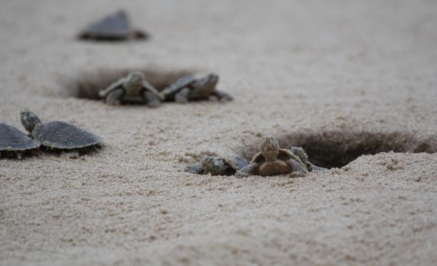 Hatchlings © Camila Ferrara