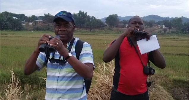 Birding in Kenema,Sierra Leone