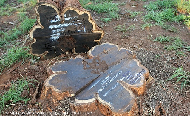 CLP News Embedded images - Makala mpingo FSC