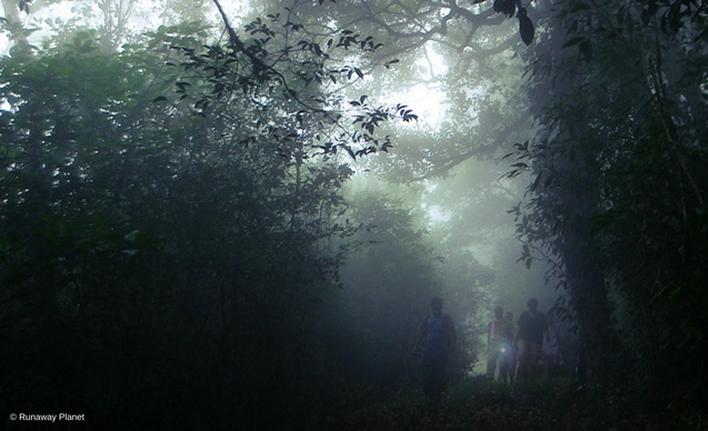 CLP News Embedded images - Anirban forest