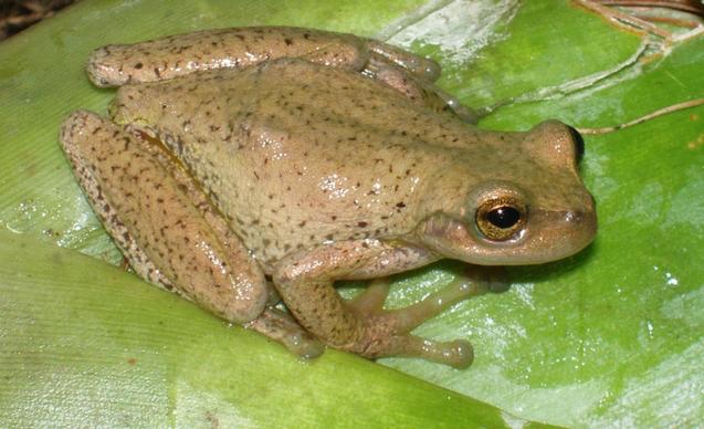 CLP News Embedded images - Edna frog