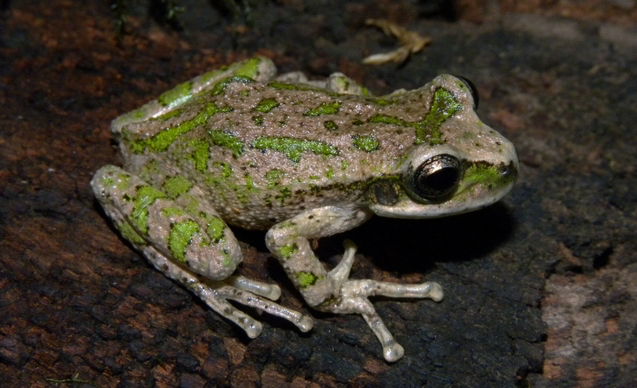 CLP News Embedded images - Mauricio frog
