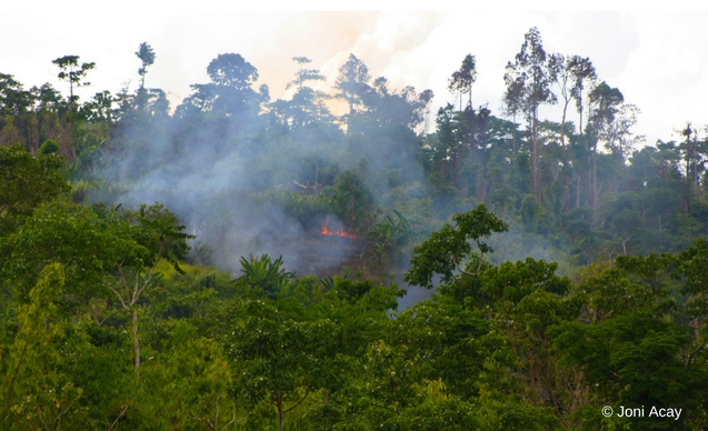 clp-news-embedded-images-isabela-forest-loss
