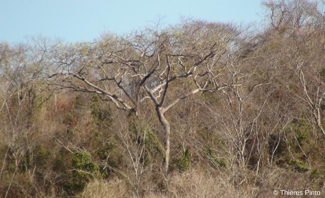 clp-news-embedded-images-caatinga-habitat
