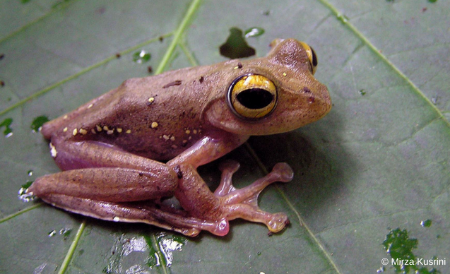 clp-watn-embedded-images-mirza-frog-2